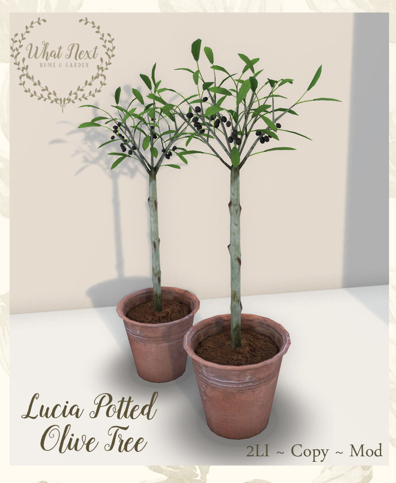 what_next_lucia_potted_olive_tree