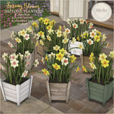 House Plants & Daffodil Planters for Fifty Linden Friday